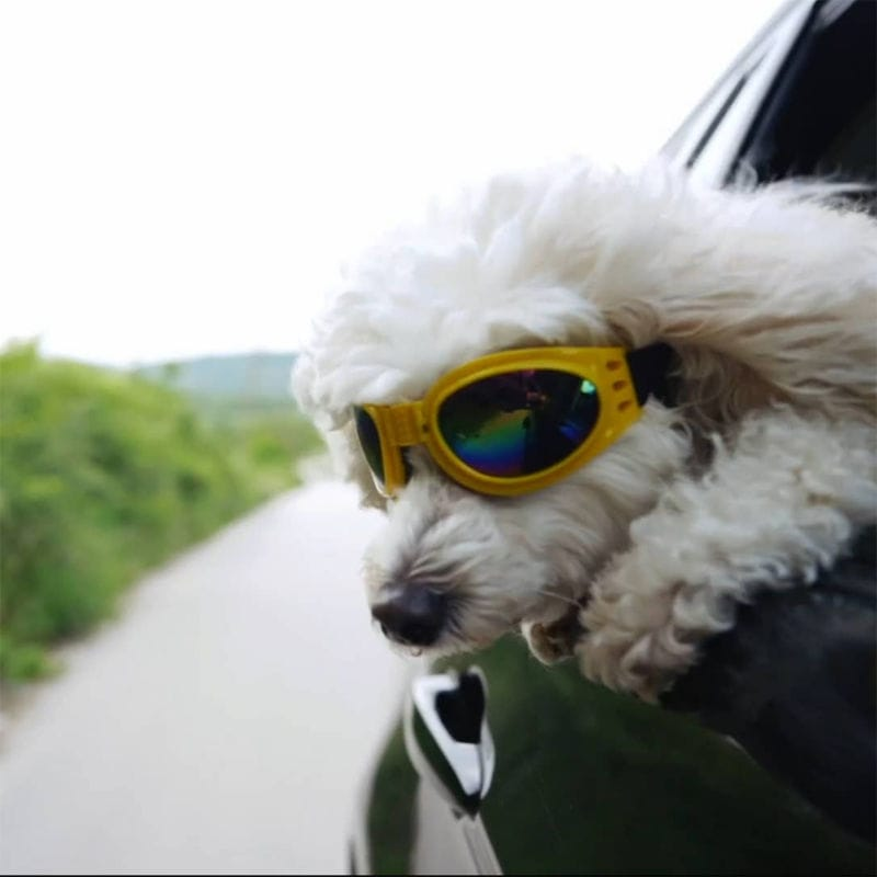 Dog with Sunglasses with Head Stuck Outside Window